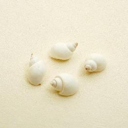 Coquillages H�lice