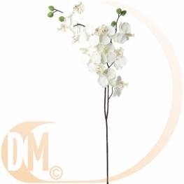 Orchid�e