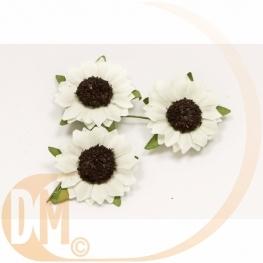 Fleurs de champs (x12)