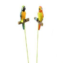 Perroquet sur pic